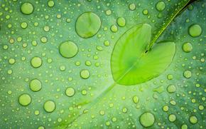 лист, вода, капли, сердечко, зеленый