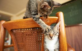 кошки, стул, лапа, игра