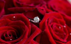 fiori, Roses, anello, rosso, diamante