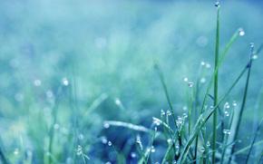 roco, hierba, maana