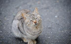 cat, cat, asphalt, closed her eyes