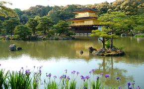 Asia, Irises, lake, Trees, sunny, pond, stones, islet, home, needles