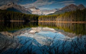 Canad, lago, Montaas, reflexin, bosque, arbustos