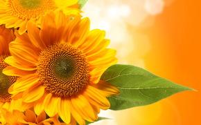 Liste, Sunflowers, grn