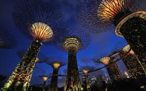 Singapour, parc, nuit, lumires, rtroclairage