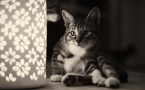 gato, luz de noche, SESIN, gato, monocromo, lmpara, en blanco y negro, flores