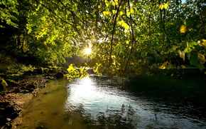 fiume, ramo, natura