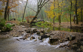 forest, river, flow, stones, fog, autumn