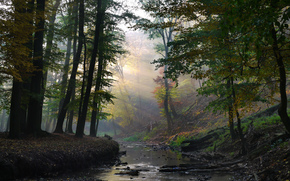 forest, creek, rays, SOLAR