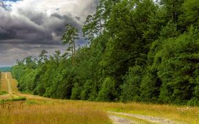 поле, дорога, деревья, лес, небо, облака, пейзаж