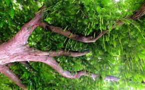дерево, ствол, ветки, листья, природа
