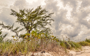 isla, las Bahamas, costa, rbol, vegetacin, las nubes, paisaje