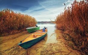 Lago di Costanza, Germania, Barche, erba secca, natura