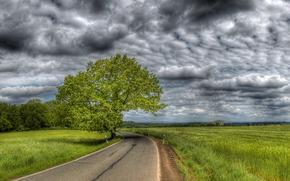 дорога, поле, дерево