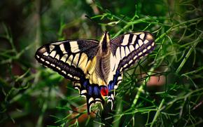 蝴蝶, 花, 宏