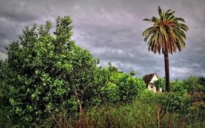 shrubs, palm, lodge, landscape
