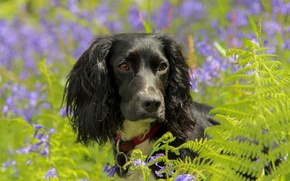 dog, Flowers, Bells, fern