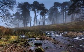 alberi, nebbia, torrente, pietre