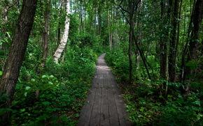 foresta, traccia, natura
