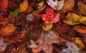 autumn, leaves, needles, nature