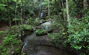 forest, rocks, waterfall, landscape
