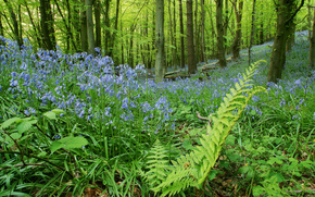 forest, Flowers, Bells, fern, meadow