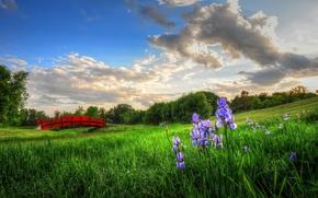 bridge, Flowers, Irises, meadow
