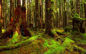 foresta, alberi, muschio, natura, paesaggio