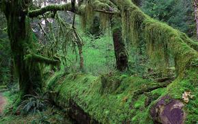 лес, деревья, мох, природа, пейзаж