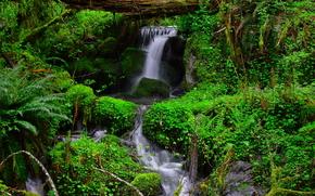 floresta, vegetao, angra, cachoeira, natureza