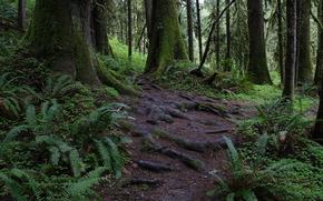 лес, деревья, растительность, природа, пейзаж