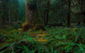 лес, деревья, мох, папоротник, природа