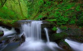 floresta, rvores, pequeno rio, angra, cachoeira, pedras, musgo, natureza, paisagem