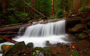 лес, водопад, речка, камни, деревья, мох, природа