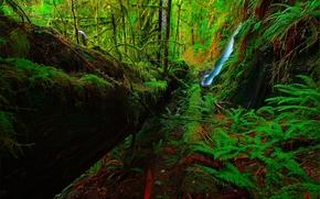 bosque, Los rboles, cascada, musgo, vegetacin, Naturaleza, paisaje