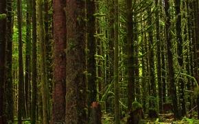 Los rboles, bosque, musgo, vegetacin, Naturaleza