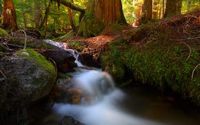bosque, pequeo ro, cascada, Naturaleza