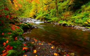 autumn, river, forest, Trees, leaves, stones, moss, nature