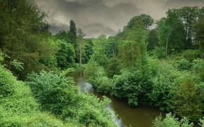 fiume, foresta, alberi, nuvole, paesaggio