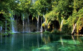 foresta, cascata, fiume
