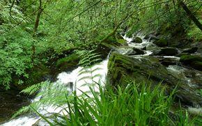 bosque, pequeo ro, arroyo, Los rboles, hierba, Naturaleza