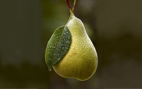 background, pear, dew