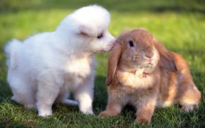 puppy, rabbit, Friends