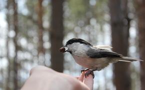 hand, bird, nutlet