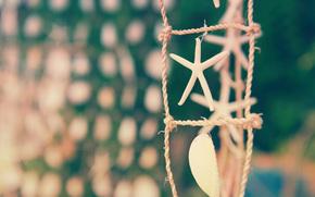 starfish, sea, shell, focus
