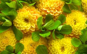 primavera, flores de color amarillo, hojas verdes