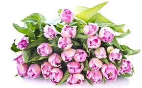 розовые, букет, тюльпаны