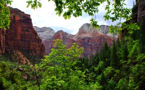 горы, скалы, природа, деревья, ветки