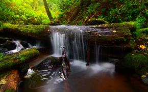 bosque, pequeo ro, log, cascada