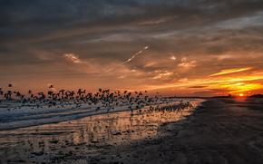 California, puesta del sol, Las gaviotas, playa, ocano
